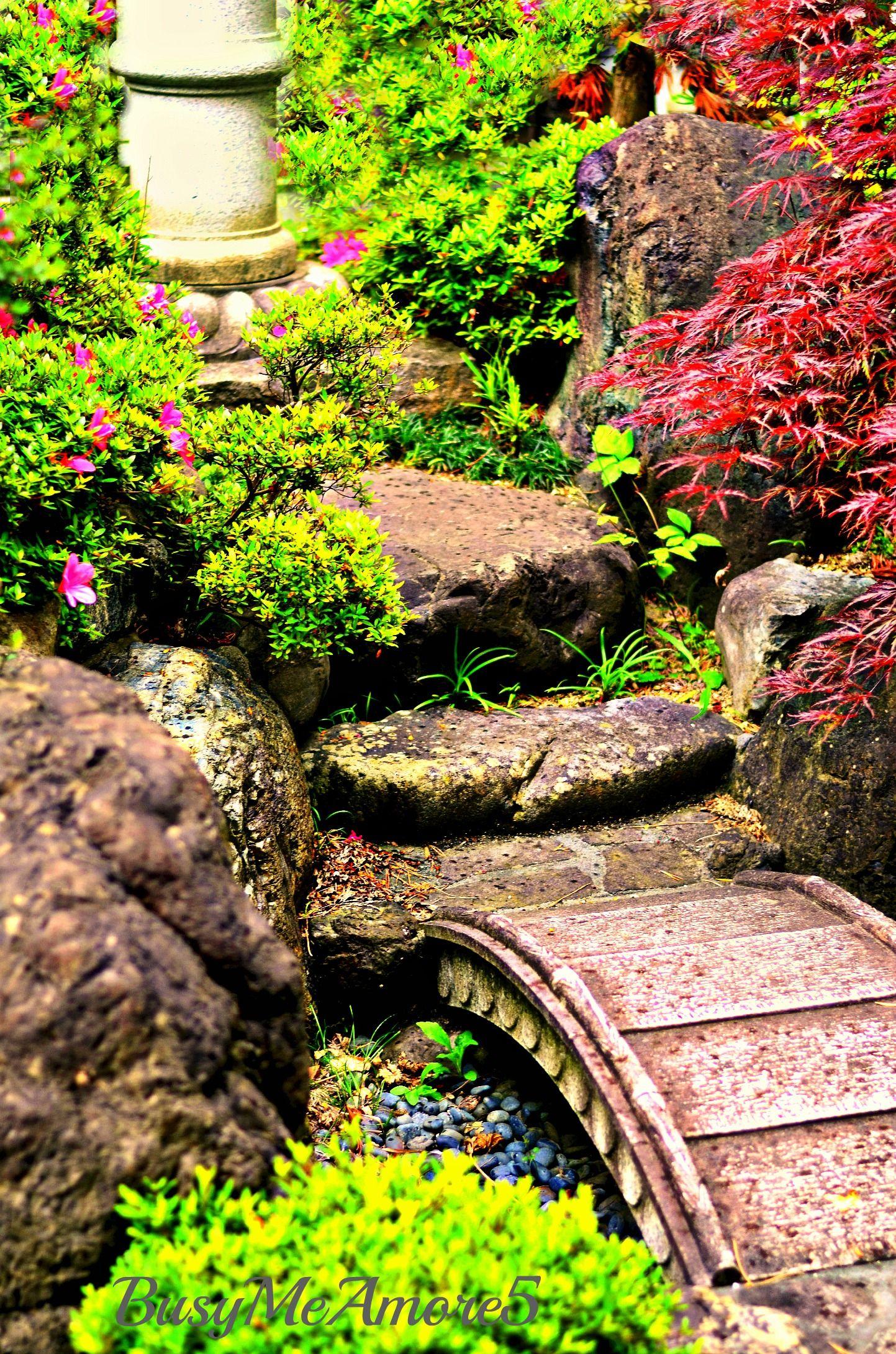 mooie exotische tuin