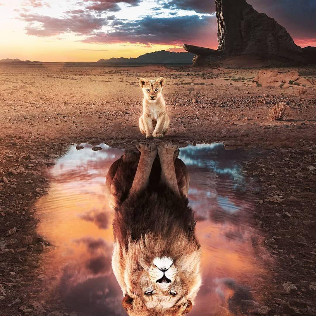Epingle Par Carla Massimino Sur Il Re Leone Fond D Ecran Chat Fond Ecran Animaux Et Art Roi Lion