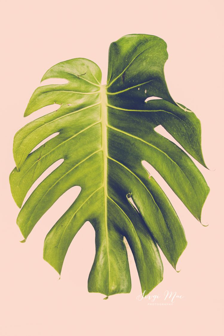 Fine art photography monstera tropical home decor modern fine art photography monstera tropical home decor modern interior design wall art monstera print amipublicfo Images