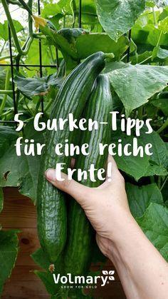 Gurken pflegen - Tipps für eine reiche Ernte - Plant Happy