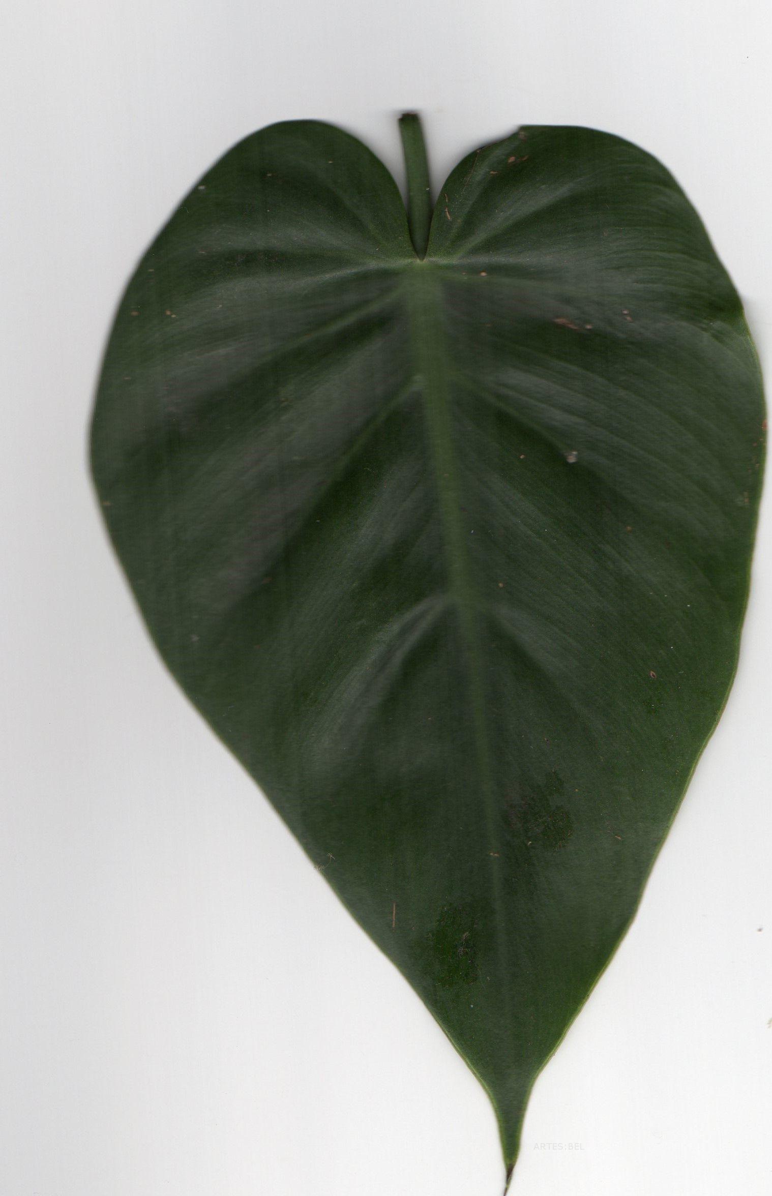 Plantas em formato de coração #heart, #plants
