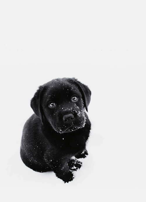 35 Adorable Pet Images To Make You Say Awww Black Lab Puppies Animals Images Puppies