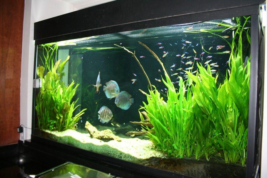Lovely Aquarium Plants ~ Http://modtopiastudio.com/simple Sources Of Unique  Aquariums Design Ideas/