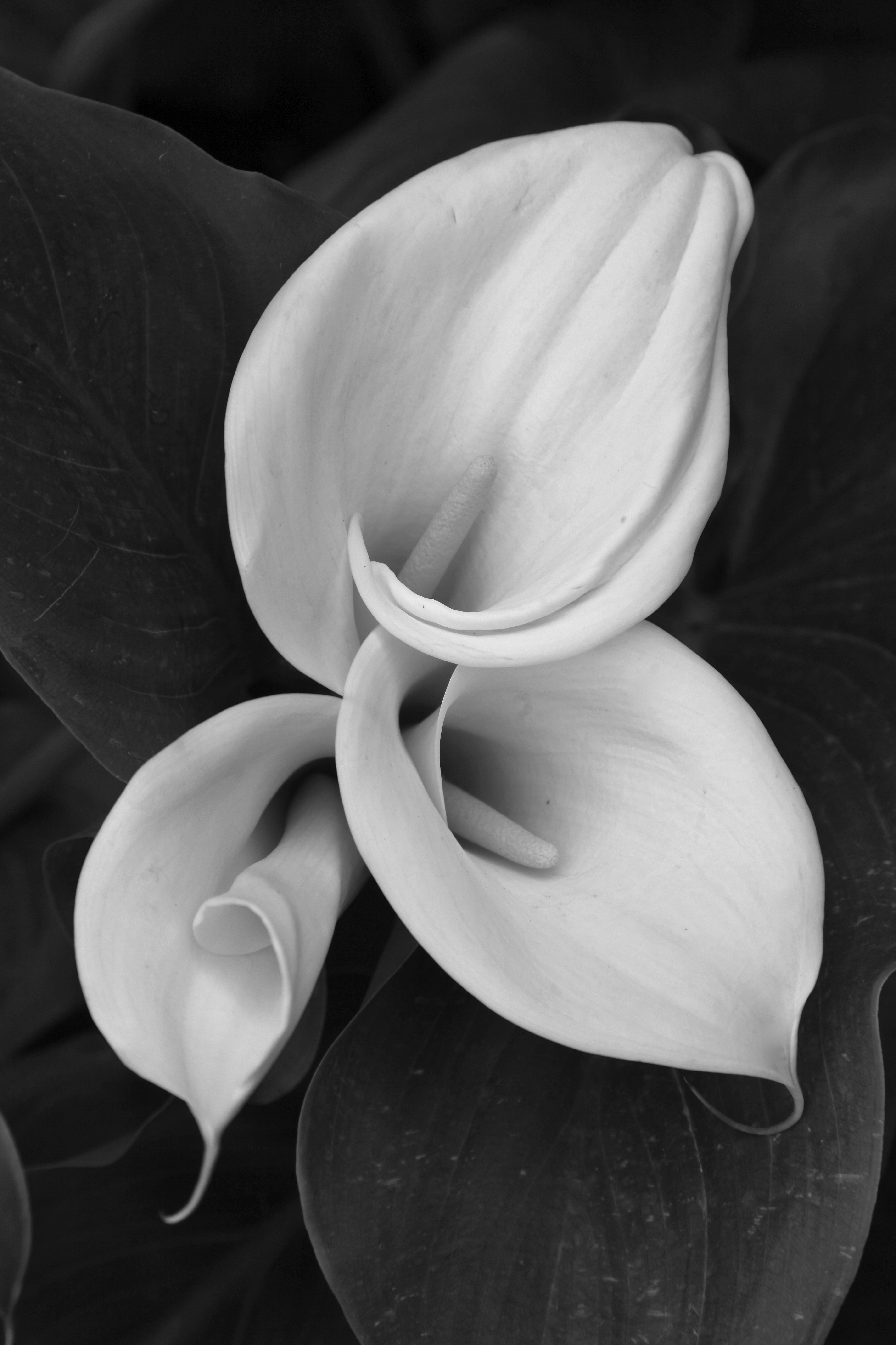 Ethereal landscapes nature photography by donna geissler - By Imogene Cunningham Lovely Photos Pinterest Photography Famous Photographers And Photographers