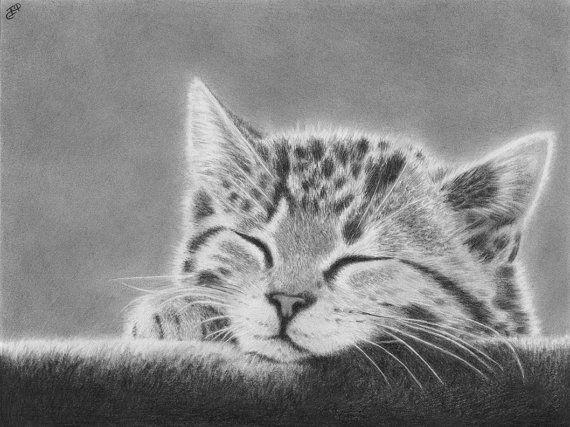Sleepy Kitten Original Portrait Graphite By Wickedillusionart