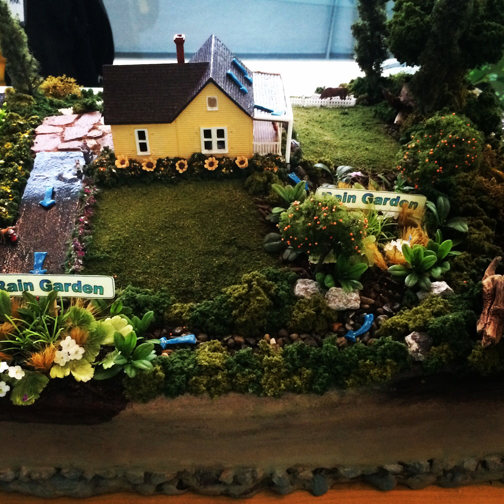 Rain garden diorama | Rain Gardens, Cisterns, Swales and More ...