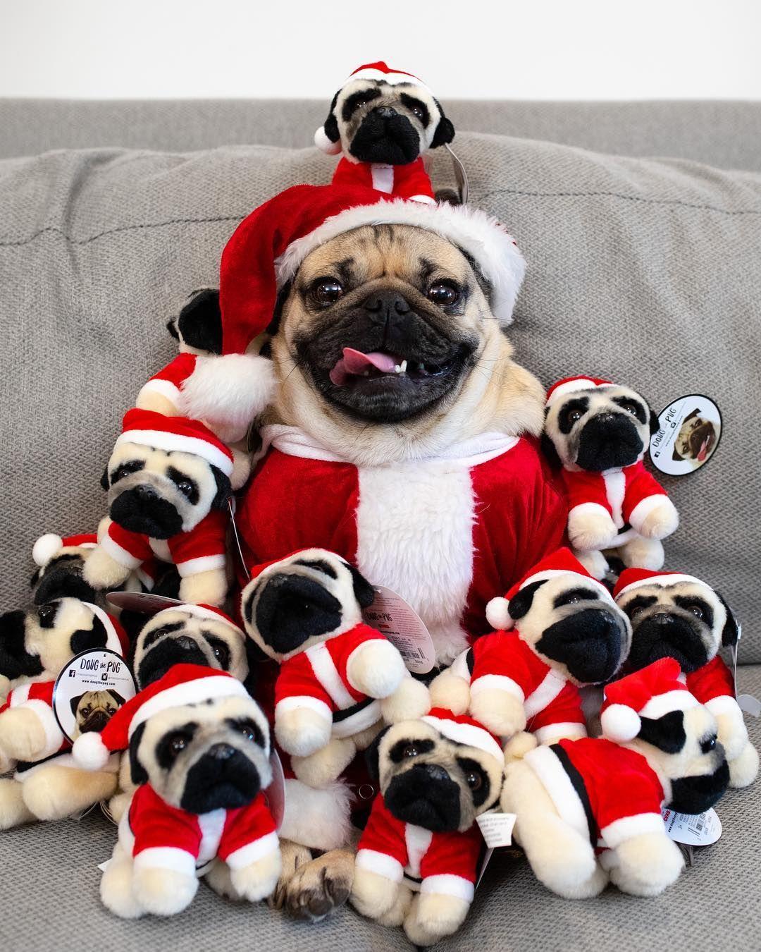 Doug The Pug On Instagram Santa Pug Is Coming To Town Doug