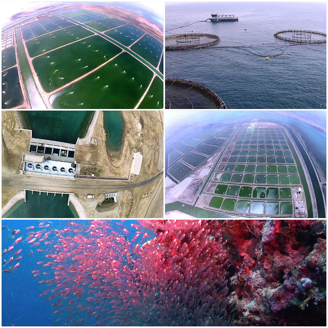 With 200 km2 of land and 65 km of coastline, National #Aquaculture Group is designed to produce more than 100,000 tons a year of the very finest quality #seafood