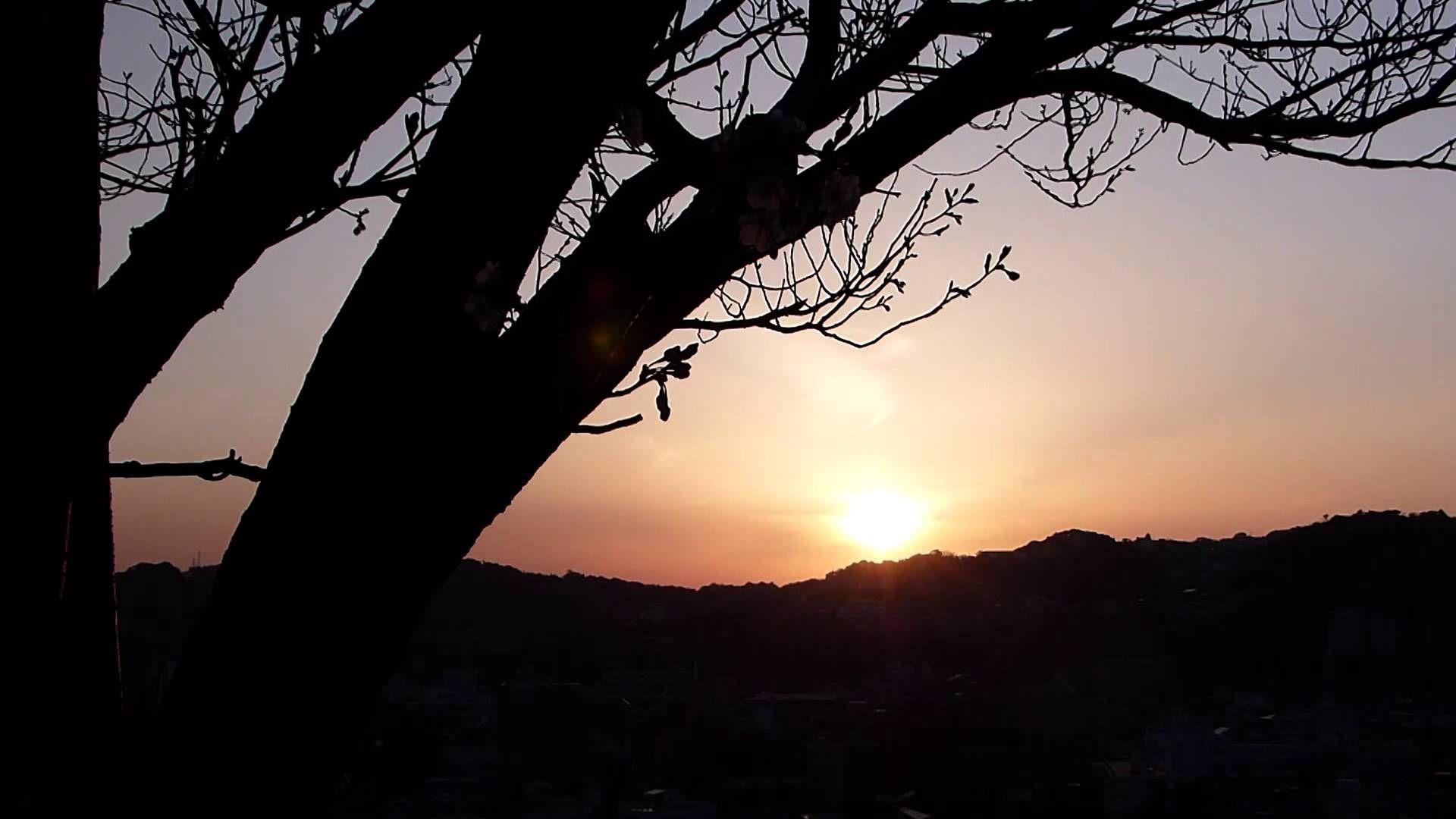 鹿児島市の光景 ソメイヨシノが咲いた彼岸の中日の夕日 Panasonic Lumix FZ200