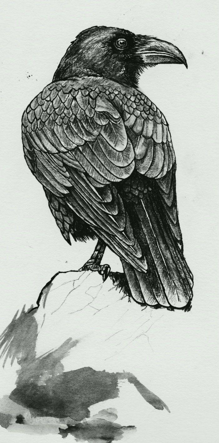 corvus corax tattoo