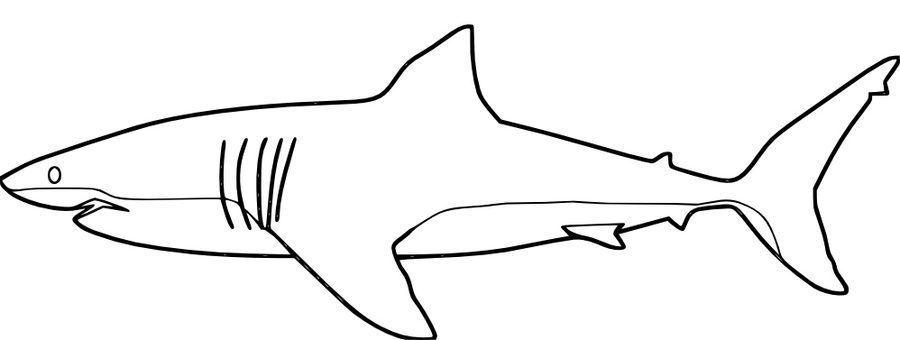 Weisser Hai Ausmalbilder Ausmalbilder Weisser Haie