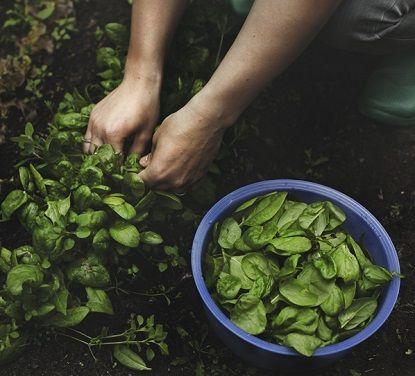 how to keep basil fresh for longer...