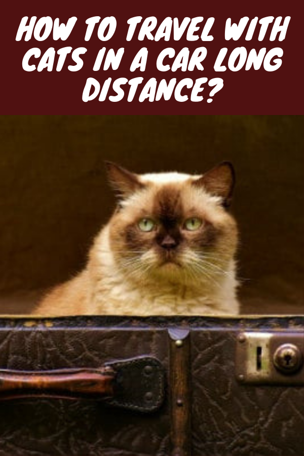 How To Travel With Cats In A Car Long Distance Cat Travel Pet Clinic Cat Leash