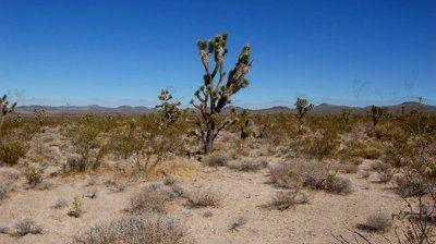 stock footage desert floor joshua tree high desert in california jpg