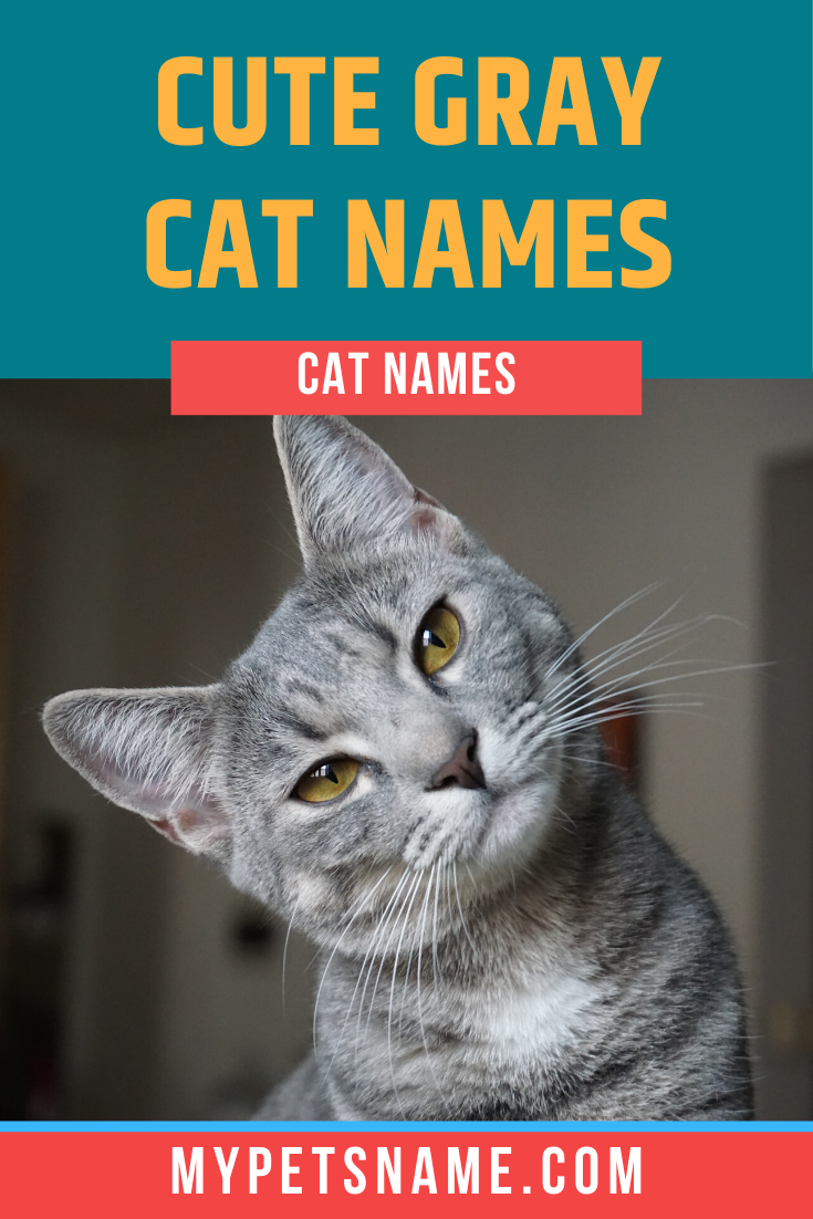Cute Gray Cat Names In 2020 Grey Cat Names Grey Cats Grey And White Cat