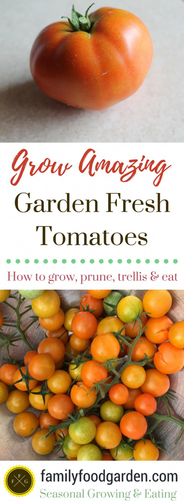 Easy Food Tips #FastFoodManagementTips  #GardeningTipsForGrowingTomatoes #tomatenzüchten