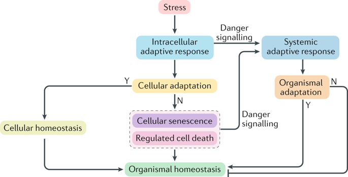 homeostasis natural