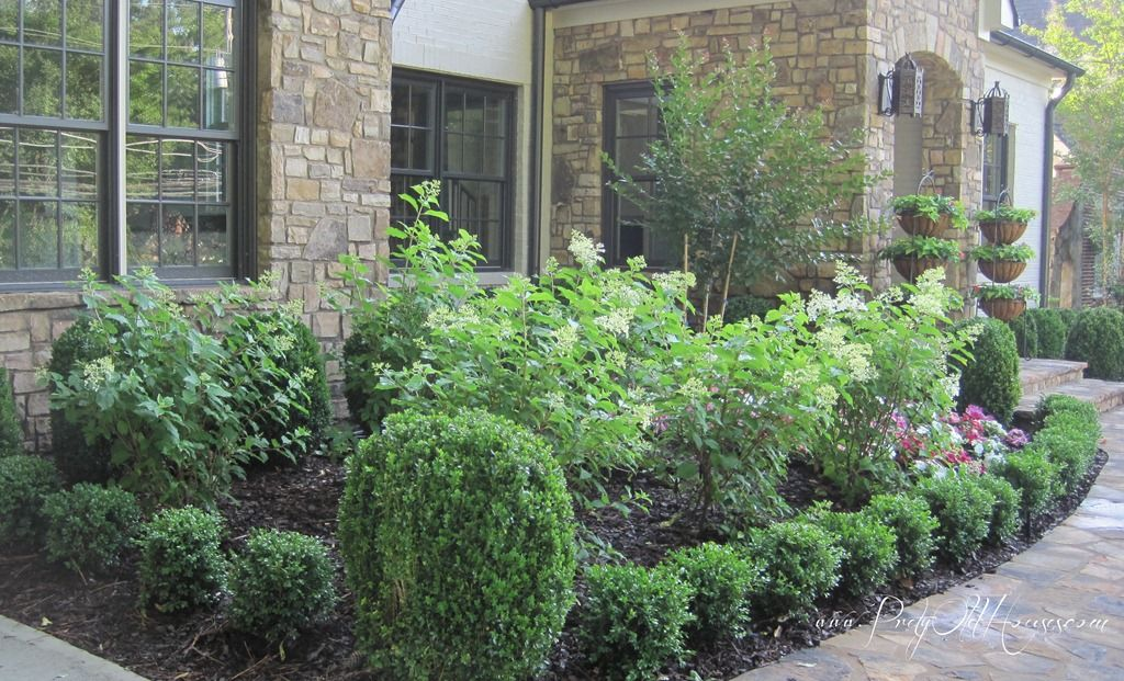 pin by mell johnson on gardening and landscaping boxwood. Black Bedroom Furniture Sets. Home Design Ideas