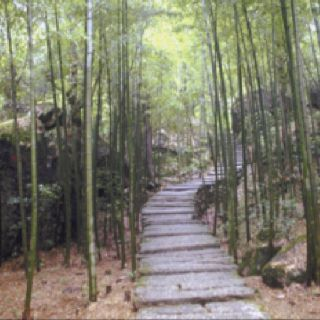 """""""The bamboo that bends is stronger than the oak that resists."""""""