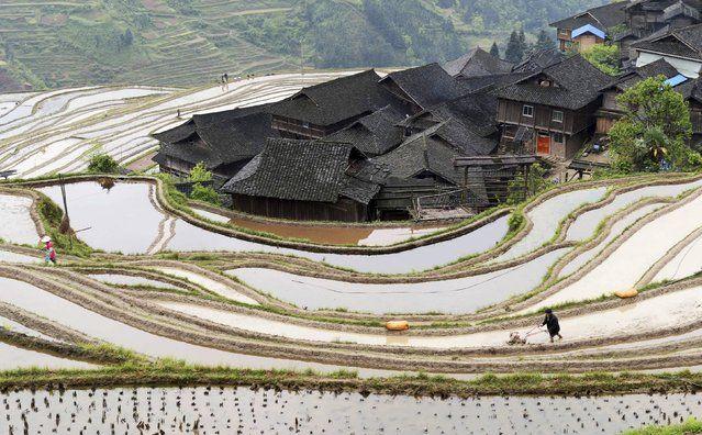 A farmer plows terraced crop fields in Congjiang county, Guizhou province April 8, 2015. (Photo by Reuters/China Daily)