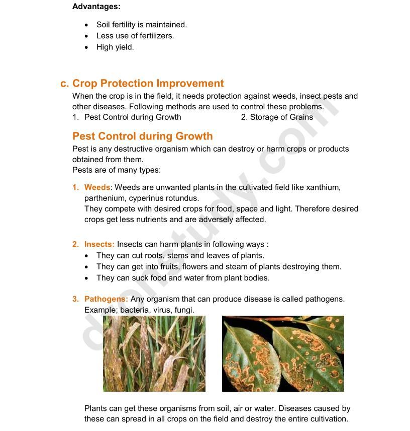 Pin by Divi Goyal on notes Crop protection, Insect pest