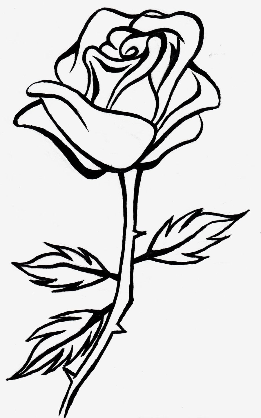 Rose line drawing clipart Roses drawing, Flower line