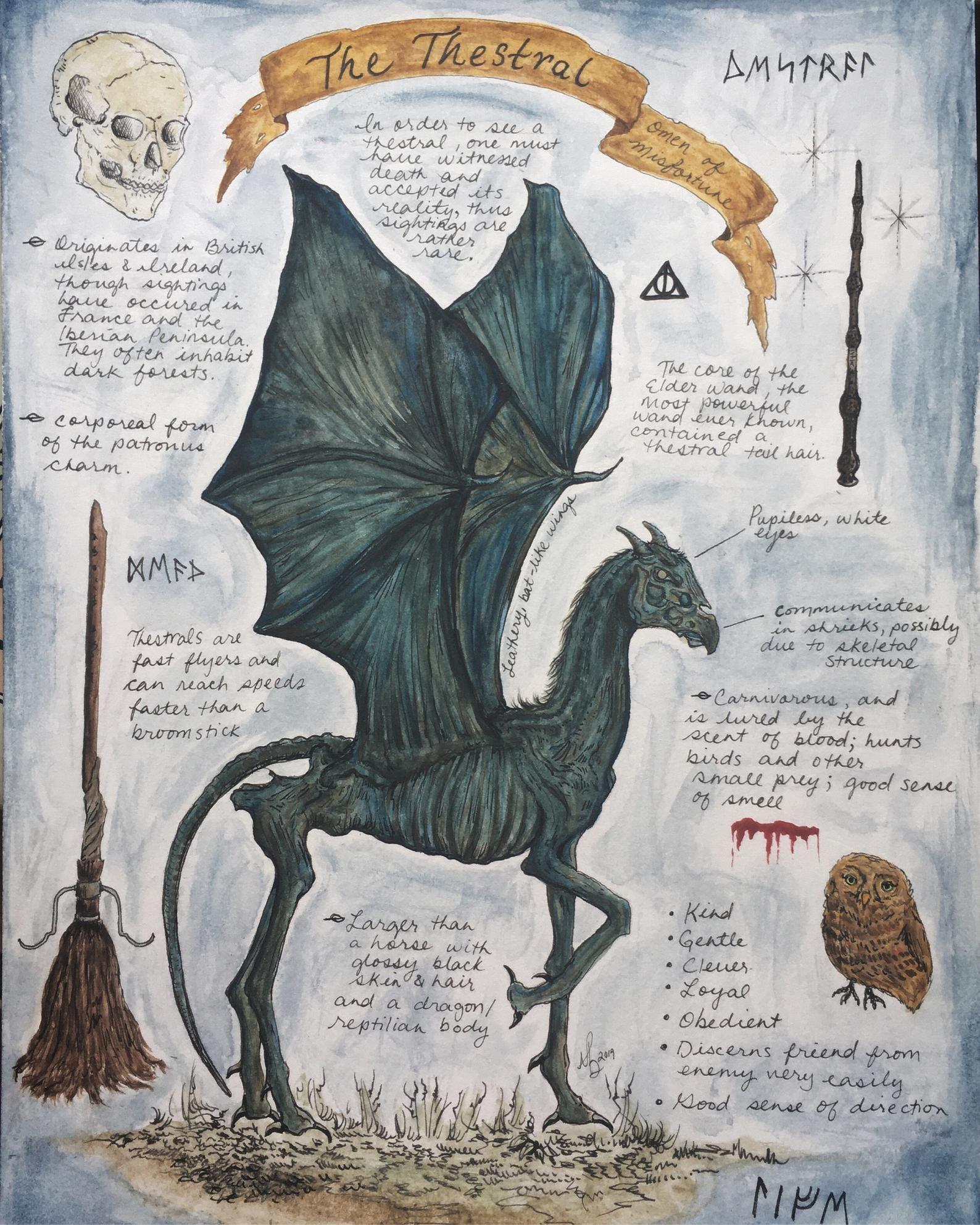 Thestral Study Print Etsy Harry Potter Creatures Harry Potter Poster Harry Potter Drawings