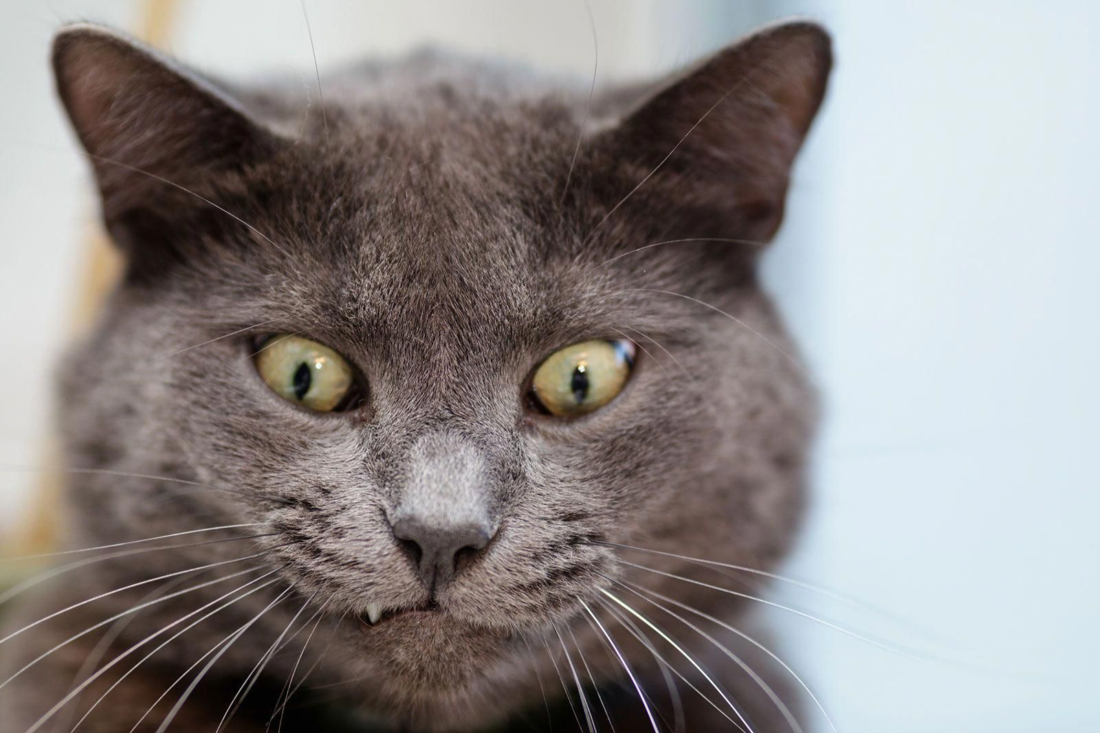 Gassy Pets Excessive Tooting May Be A Problem Fleashampooforcats Funny Cat Faces Funny Cat Videos Crazy Cats