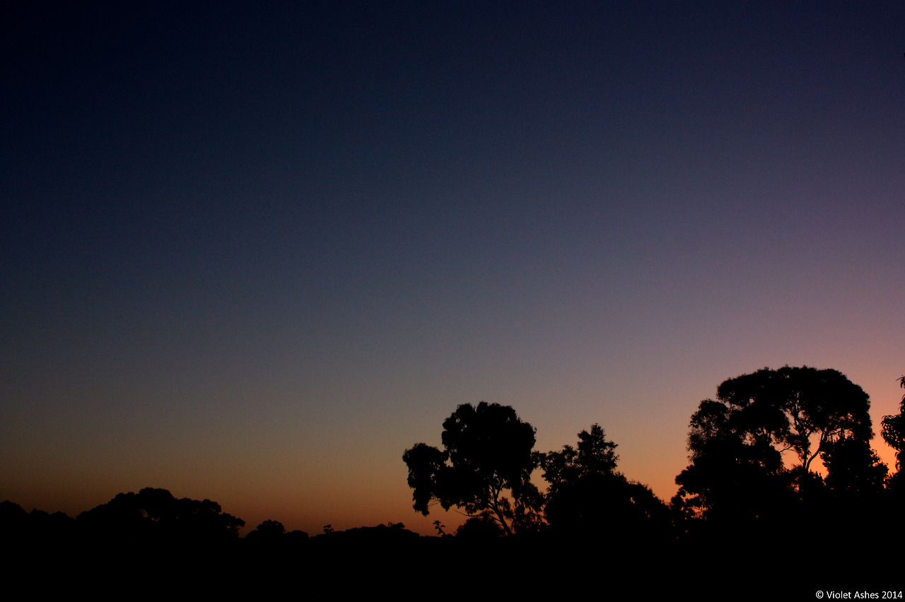 {Sunsets} Sunset 71 12th March 2014 © Violet Ashes 2014 #CanonEOS450D #sunset #sky #VioletAshes #Adelaide #SouthAustralia #Australia