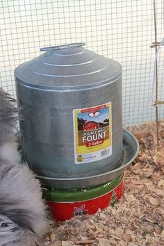 Cookie Tin Heater For Water Chicken Waterer Heated Chicken Waterer Chickens Backyard