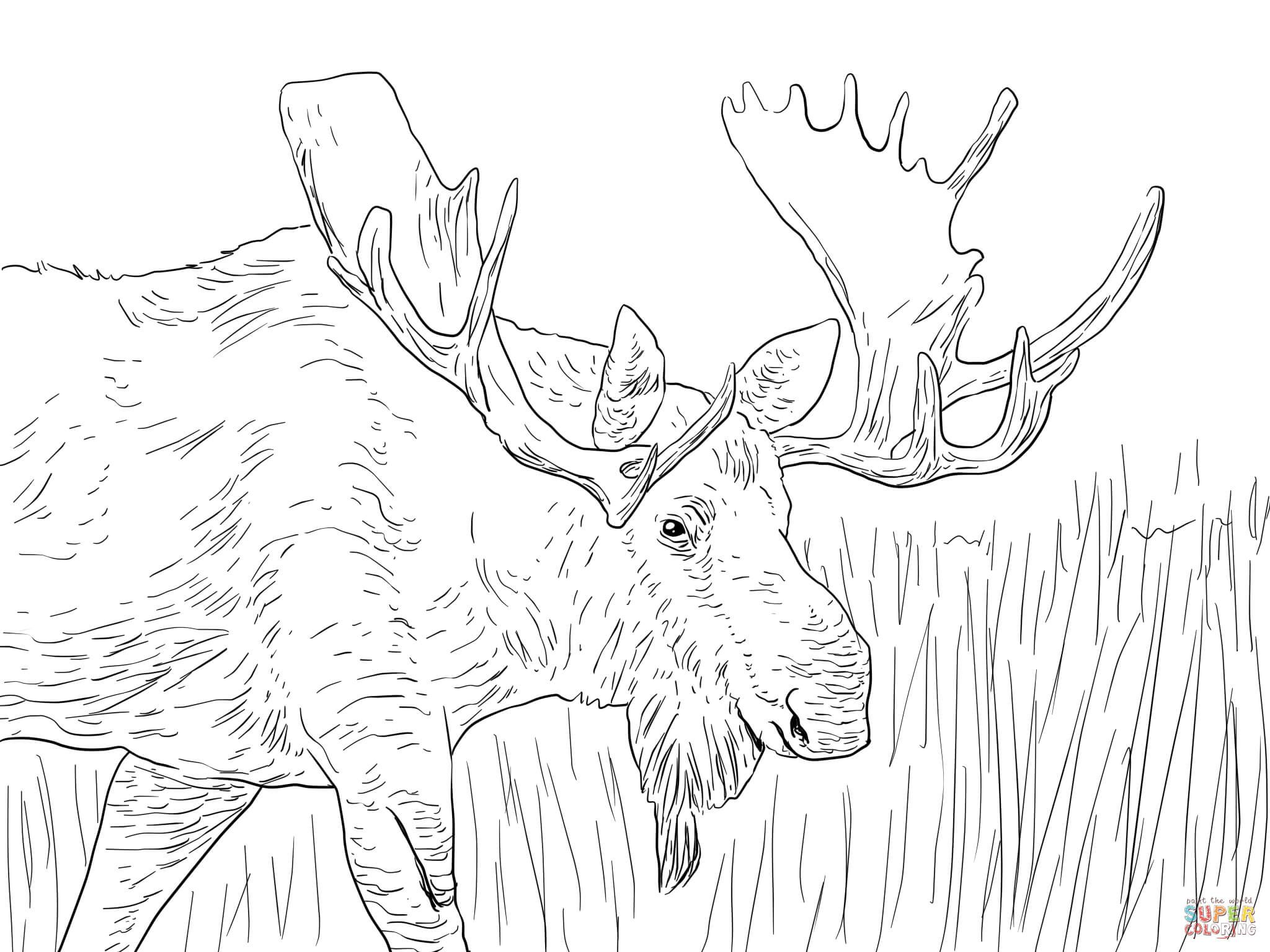 Bon Alaska Moose Coloring Page From Moose Category. Select From 28148 Printable  Crafts Of Cartoons, Nature, Animals, Bible And Many More.