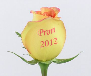 Schaefer's Speaking Roses add a special touch to new Prom Corsages!