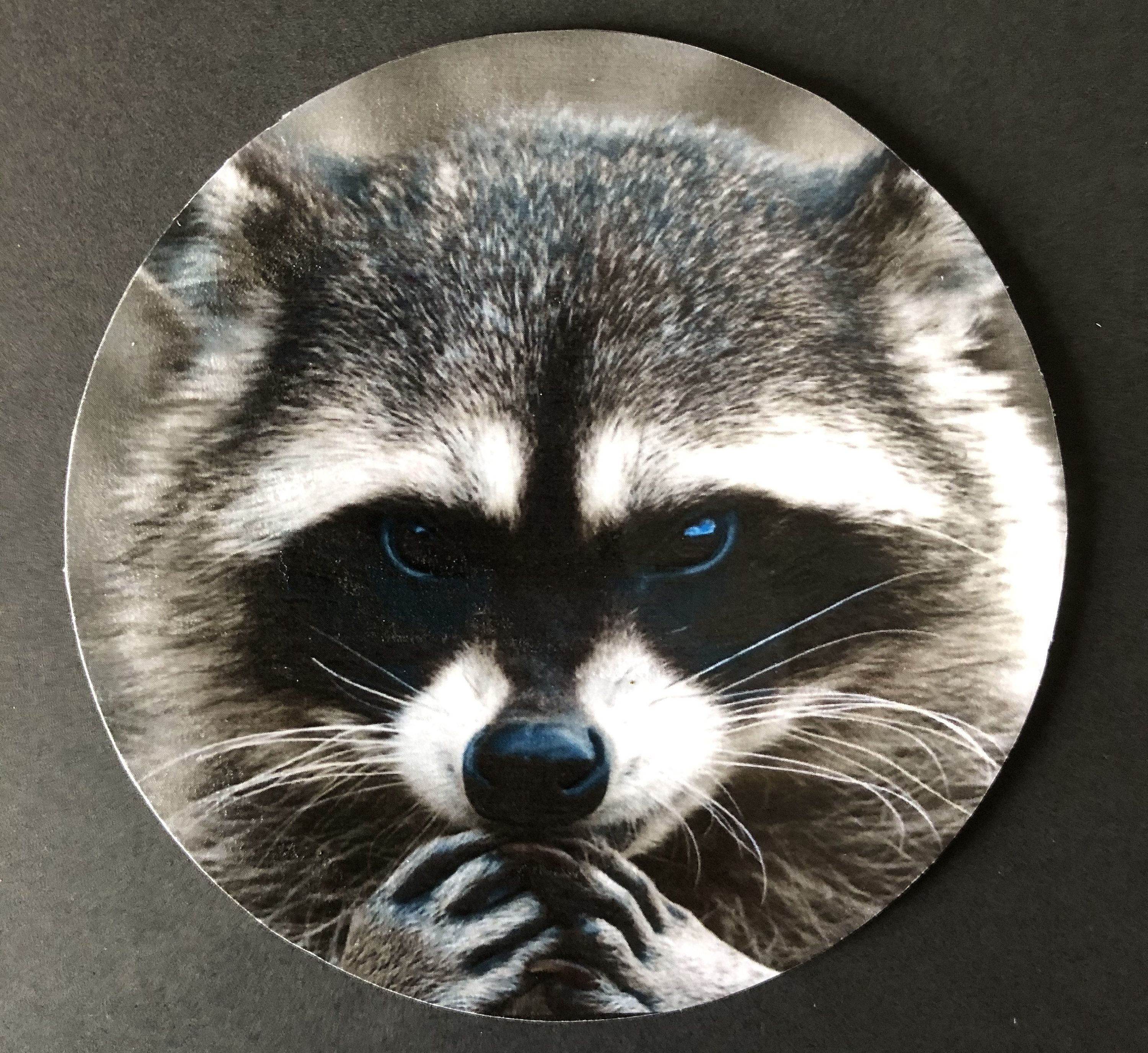 Raccoon - Recycled CD Art - Home Decor #recycledcd