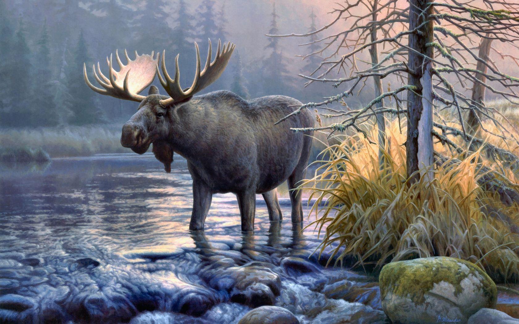 Awesome Moose Wallpaper Moose Wallpapers Dyr Og Kjaeledyr Dyr Maleri