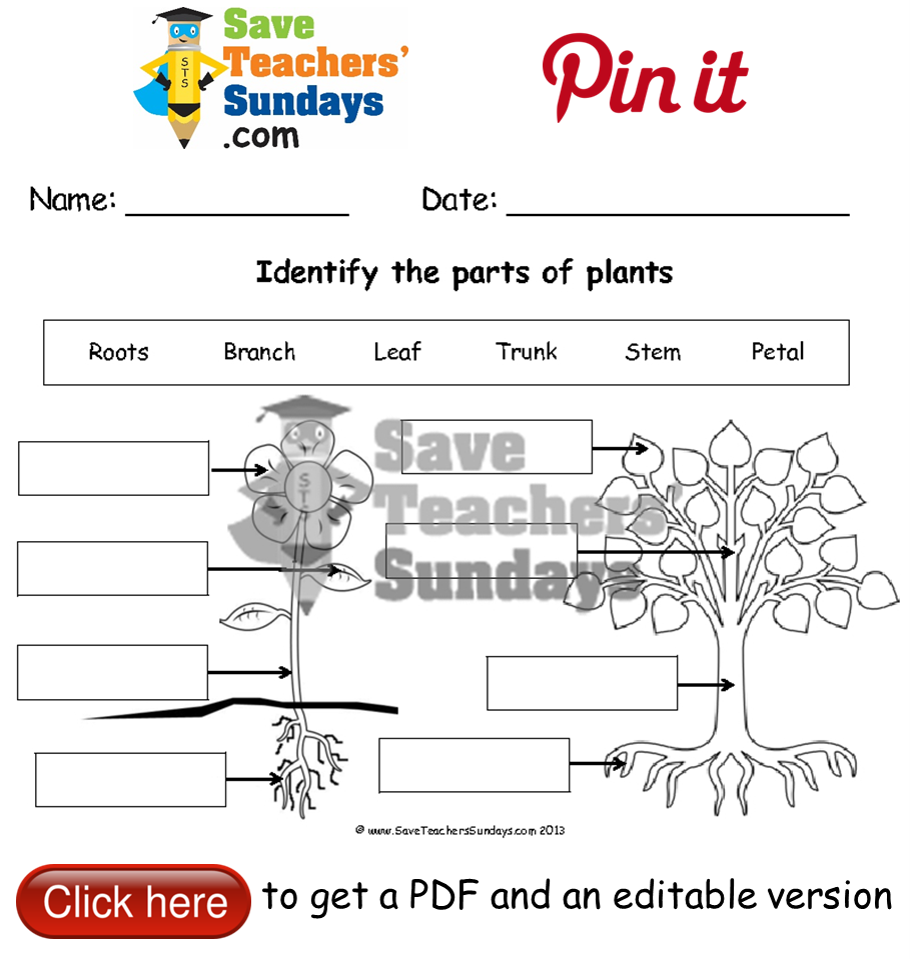 Uncategorized Parts Of A Tree Worksheet label parts of a plant and tree worksheet go to http http