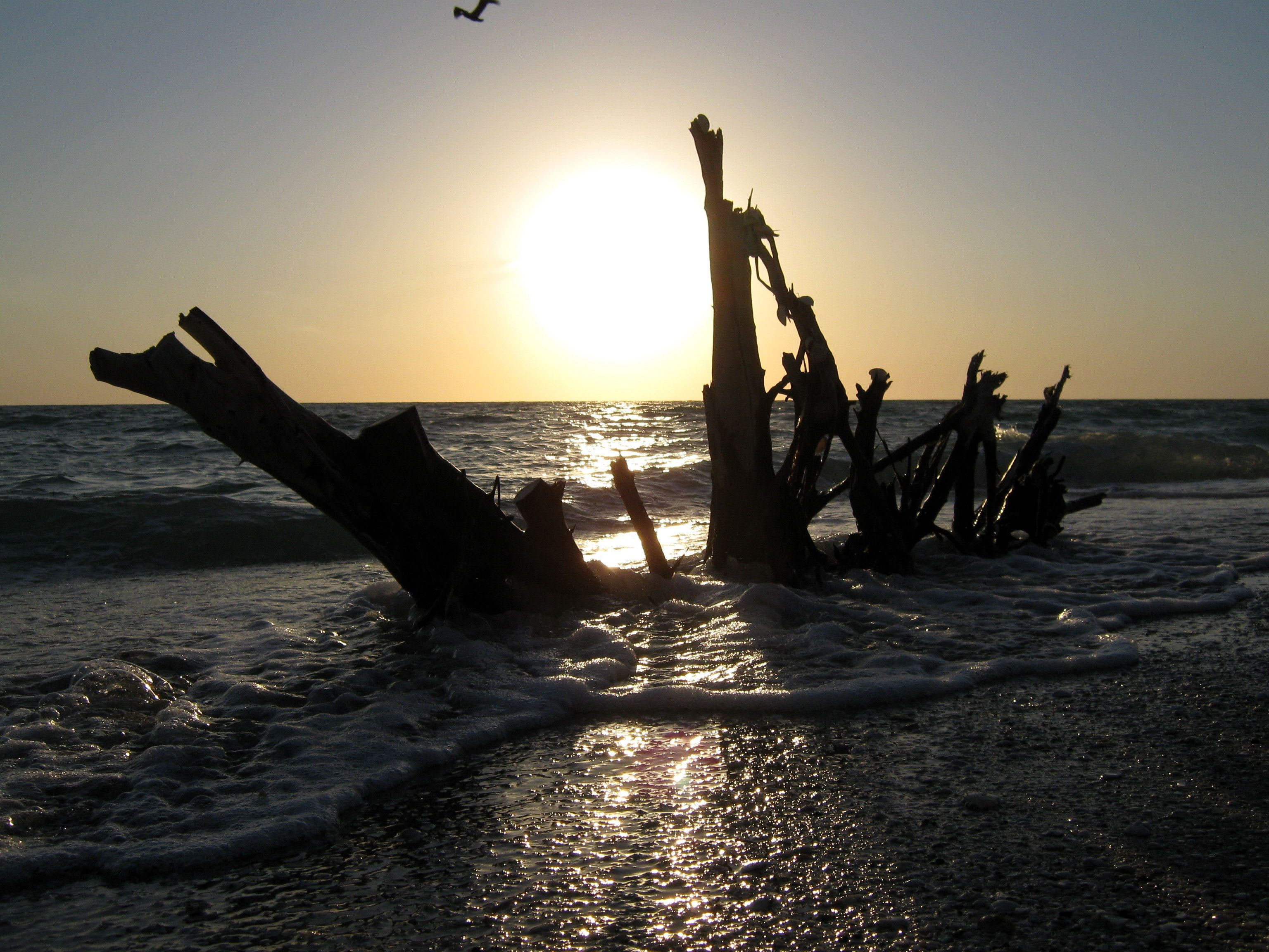 Stump Pass beach   Englewood florida, Beach, Photo