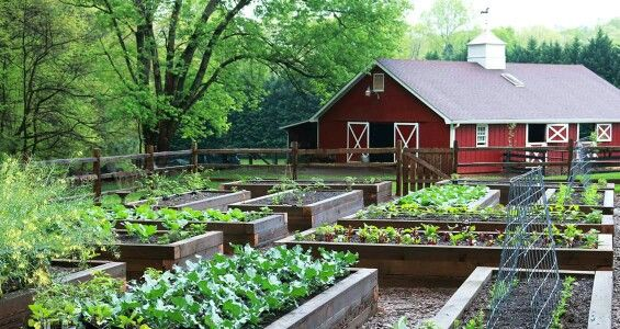 Growing A Greener World Raised Beds Home Vegetable Garden Backyard Vegetable Gardens Vegetable Garden