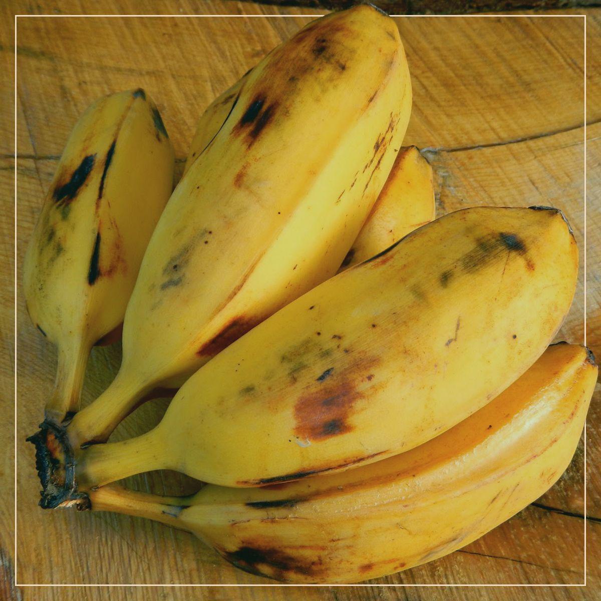 Wussten Sie, dass Burro-Bananen einen hohen Eisengehalt haben und daher …   – Health is Wealth