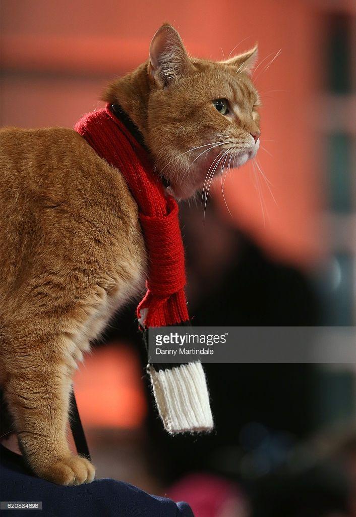 Uk Premiere Of A Street Cat Named Bob Street Cat Bob Tabby