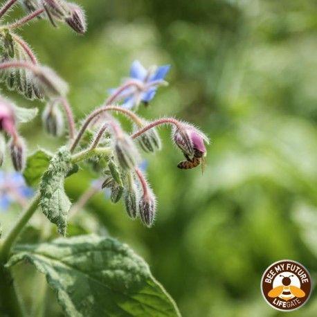 Con Bee my Future puoi contribuire anche tu alla tutela delle api adottandone mille per un anno.