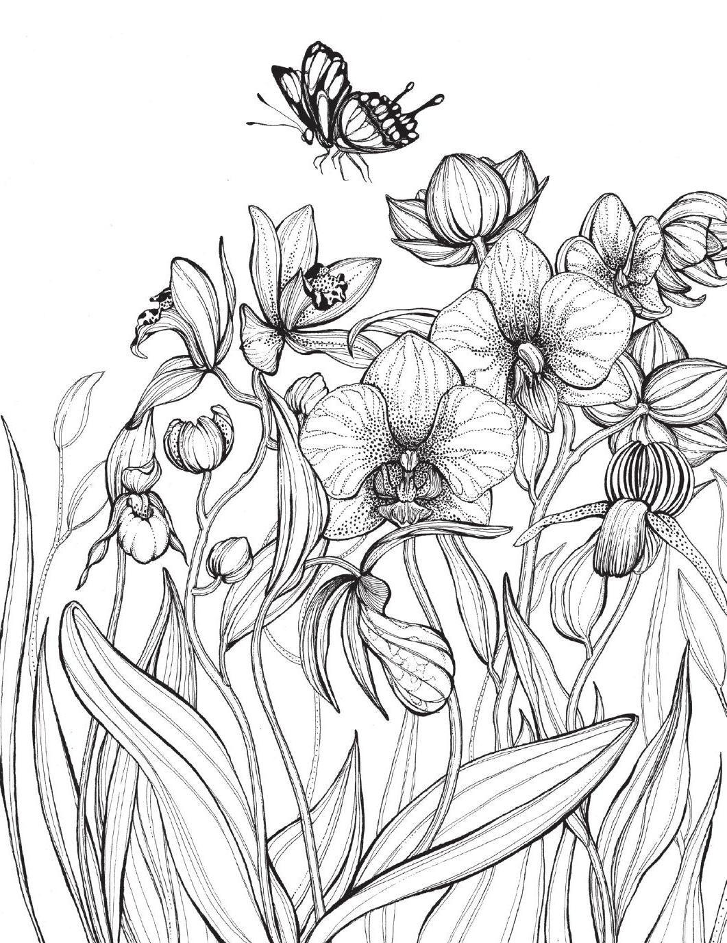 Kleurboek Voor Volwassenen Bloemen Daniela Jaglenka Terrazzini Garden Coloring Pages Flower Line Drawings Flower Coloring Pages