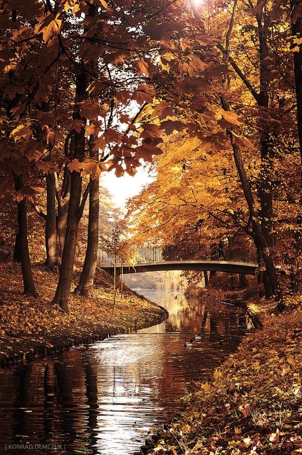Warm Autumn By Konrad Demczuk 500px Autumn Landscape Autumn Scenery Autumn Photography