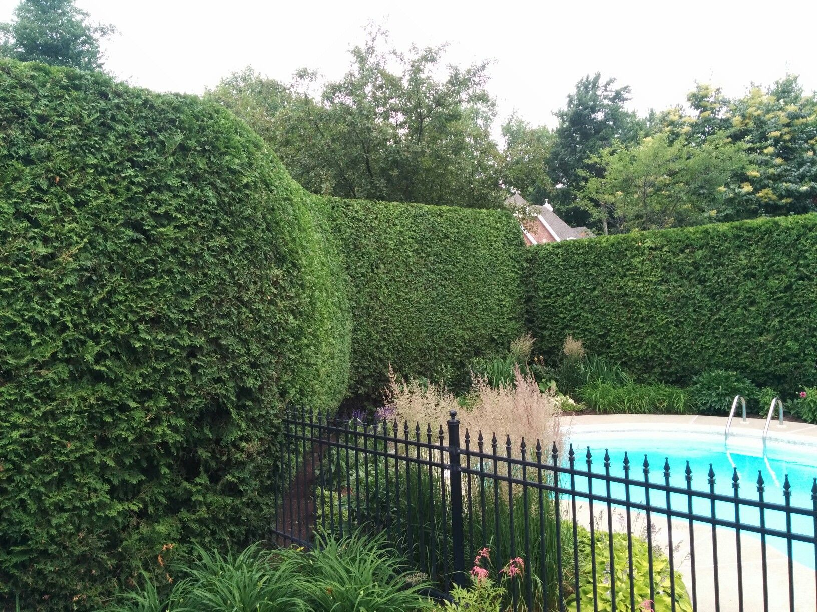 Hedges, Shrubs, Human Height