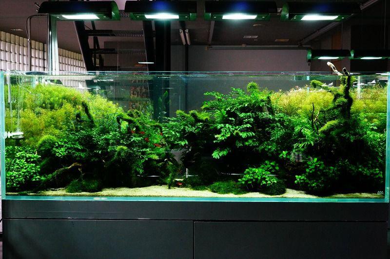 Nature Aquarium Gallery · Nature AquariumAquarium AquascapeNano  AquariumPlanted ...
