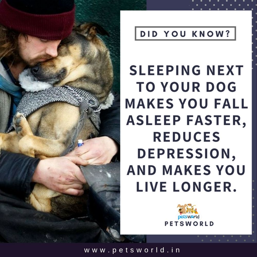 Sleeping With Your Dog Is Actually Good Petsworld Dog
