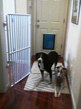 Extra Tall Pet Gate Pet Gates Pinterest Extra Tall