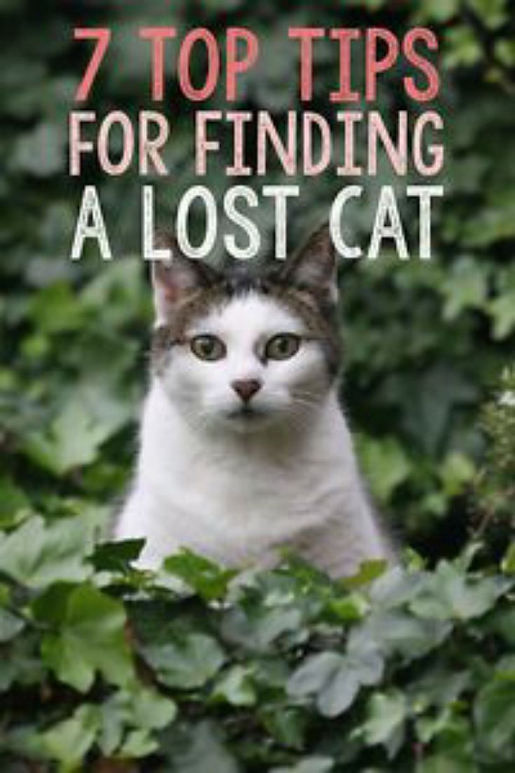 Here are a few tips to help you find a missing cat and