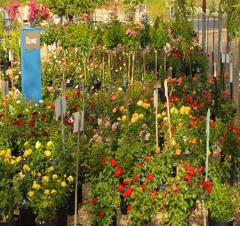 Berridge Nurseries Inc Az Lots Of Information On Plants The Grow Well Here