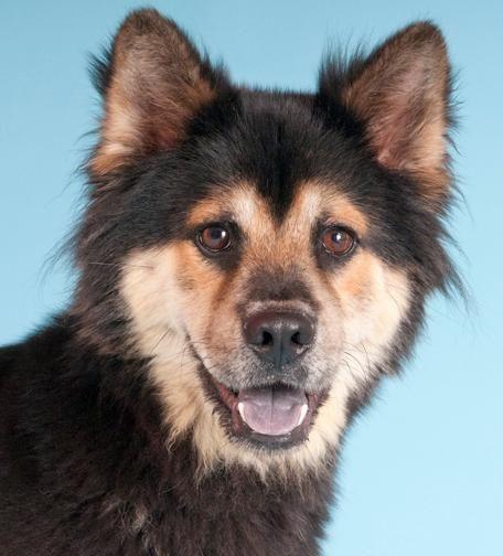 Adopt Teddy On Pets Dogs Pet Adoption