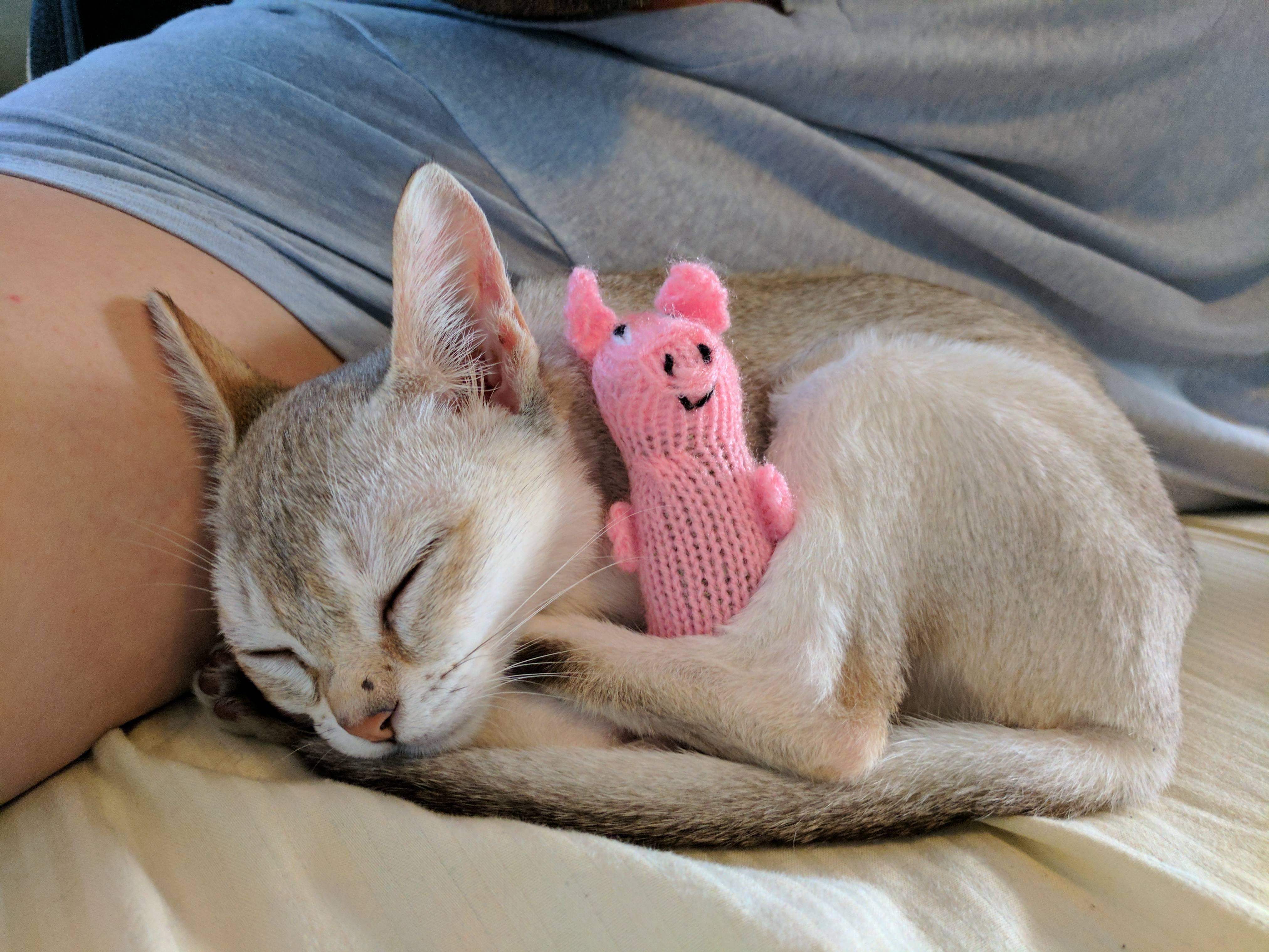 feral cat rescue michigan